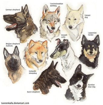My favorite dog breeds + extra by Tuonenkalla