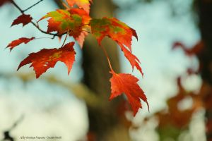 Leaf 4 by Cocotte-Vero91