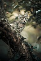 Jungle Kitty by Sblourg