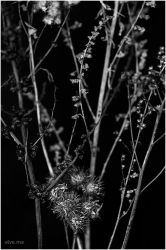 b/w nature.1 by Ilmael
