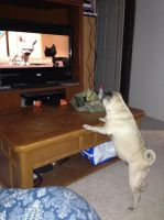 my dog watching bolt! by iluvgrey