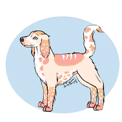 {OPEN} Spaniel Adopt by Intergrated
