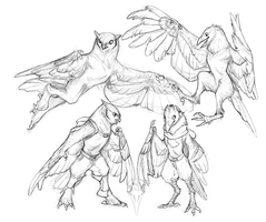 Owl and Crow Stylized Sketches by tashcrow