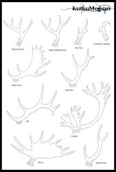 North American Antlers Basic Tutorial -KutkuMegsan by KutkuMegsan