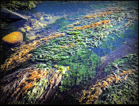 Algae By The River by surrealistic-gloom