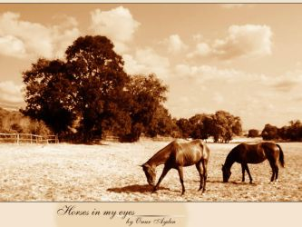 Horses in my eyes by nerval