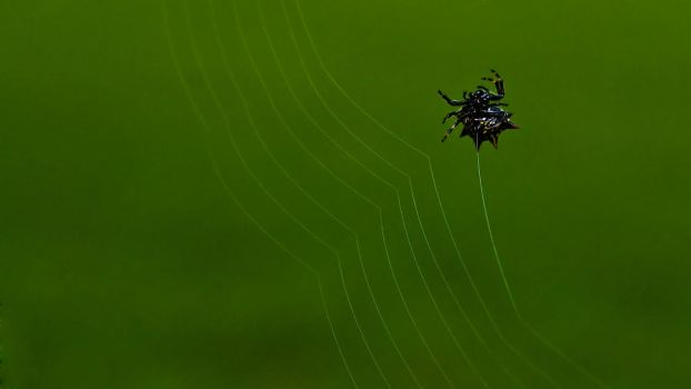 What a wicked web we weave by RyoThorn