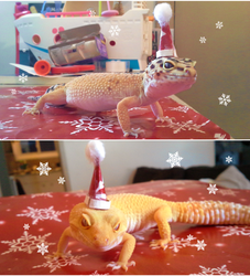 Merry Geckmas!!! by MrGremble
