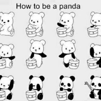 How to be a Panda by toby4ever