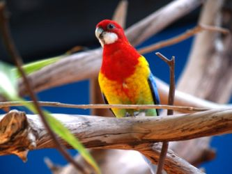 Zoo Trip Parrot by the-astronaut