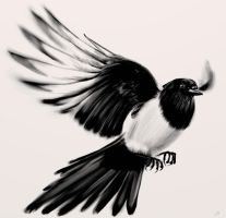 Magpie by Maxiator