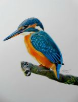 Kingfisher on a branch by LarissaBoef