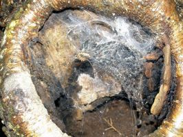 Web in a stump by Gaming-Dork