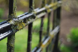 Moss Gate by theLindah