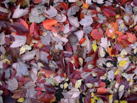 Scattered Leaves I by SavageCharms