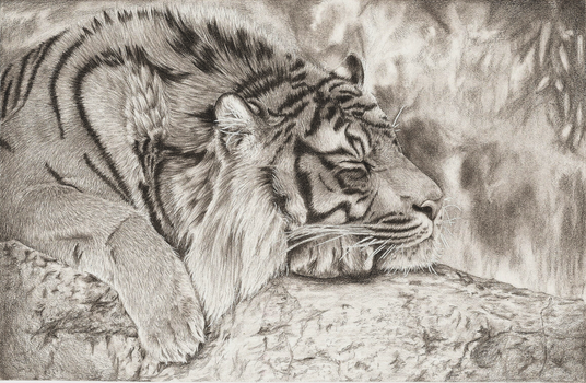 Tiger by Stormcloud16