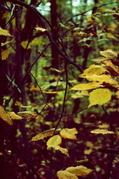 Through underwood and thicket 01 by DigUpOphelia
