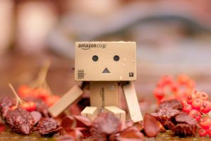 Danbo In The Autumn by Pamba