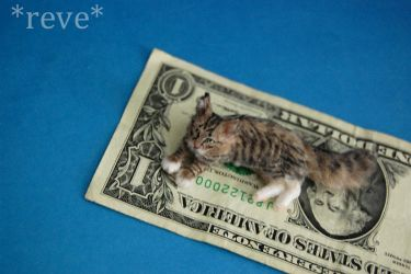 Miniature Polydactyl Maine Coon Cat by ReveMiniatures