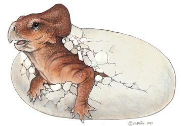 Hatching protoceratops drawing by Reptangle