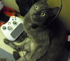 Grey Kitty Xbox 3 by SailorUsagiChan