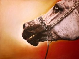 Arabian Horse by thefrenchberet