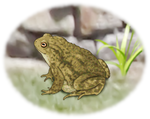 The Toad - The Pure Earthiness by MisterBug