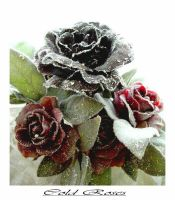 Cold Roses by Anne1982