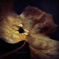 autumn sorrows by JoannaRzeznikowska