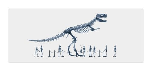 X-Ray Dinosaur Museum by Riddlez46