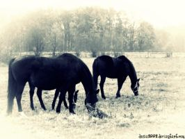 horses by Dusia2992