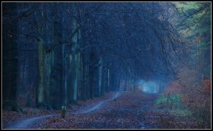 Blue light in the late morning by jchanders