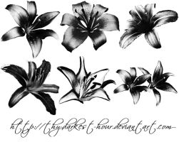 Lilly Brushes 02 by Thy-Darkest-Hour