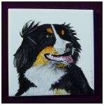 Bernese Mountain Dog by Xantosia