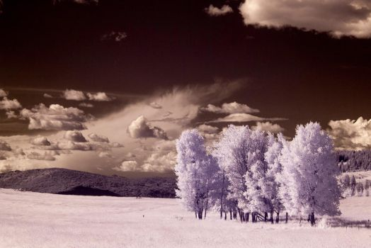 White Trees by struggle2012