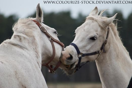 Playing horses stock1 by Colourize-Stock