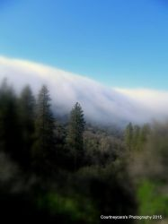Fog rolling in 2015 by Kiwiberry122