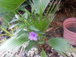Palm and flower in the wrong place by dainfort