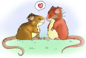 Raticate love
