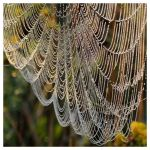 Hanging Web by evaPM