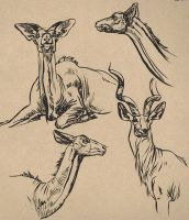 greater kudu sketches by captainhawkeh