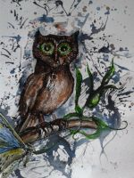 Little Owl... by TriciaS