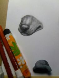 Muzzle in charcoal by BrokenBrookieCookie