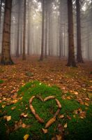 heart of franconia by schneids