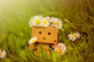 Danbo found some flowers by Pamba