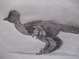 Anchiornis by Teratophoneus