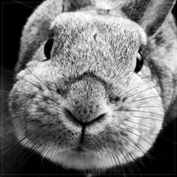 Rabbit's face by ShaeeAW