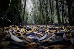 grotty autumn by Suvelis