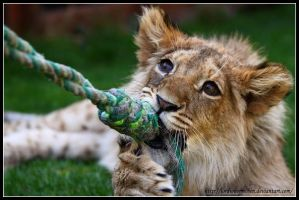 Play with Akimba by AF--Photography