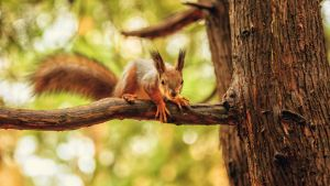 curious squirrel by fly10